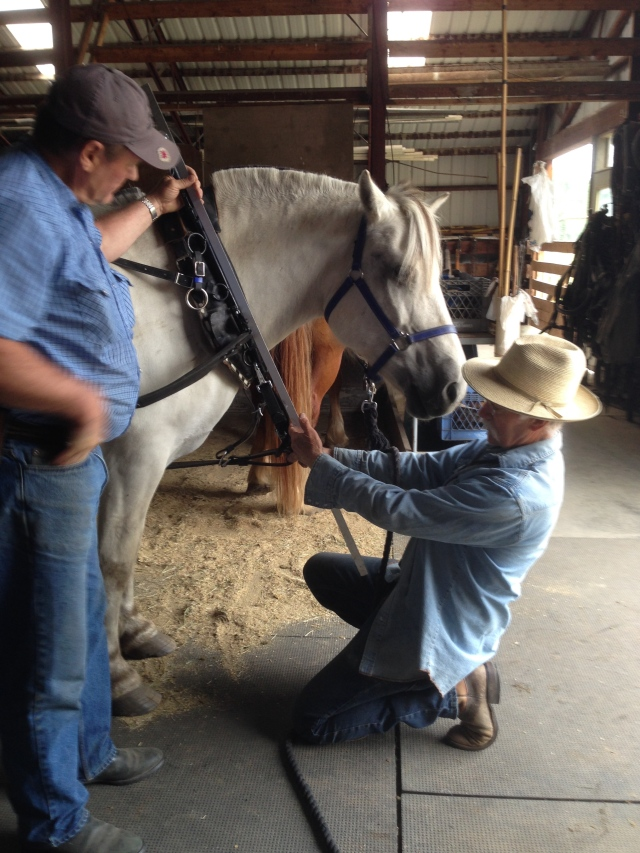 Doc demonstrating proper harness adjustment