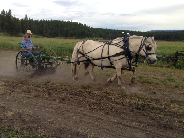 Quentin driving Fjord team with Homesteader implement